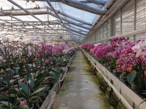 Gärtnerei Schwerter Orchideenzucht